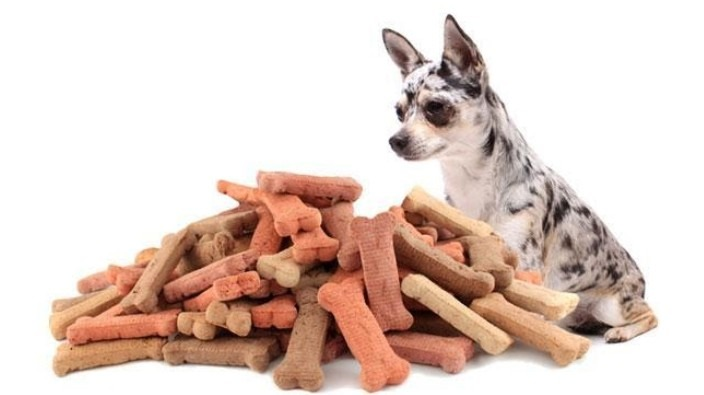 canine bloat home treatment